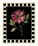 Besler Pink Peony I Poster by Besler Basilius