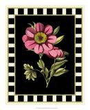 Besler Pink Peony III Giclee Print by Besler Basilius