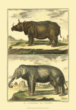 Elephant and Rhino Posters by Denis Diderot