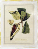 Crackled Paradise Foliage I Premium Giclee Print
