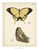 Butterfly Profile II Giclee Print
