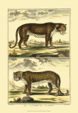 Panther and Leopard Posters par Denis Diderot
