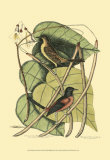 Baltimore Bird and Catalpah Poster by Mark Catesby