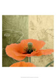Orange Poppies III Posters by Patty Q.