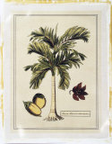 Crackled Paradise Palm I Premium Giclee Print