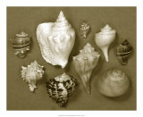 Shell Collector Series I Giclee Print by Renee Stramel