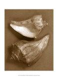 Sensual Shells I Art par Renee Stramel