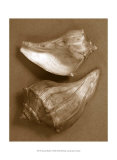 Sensual Shells I Art by Renee Stramel