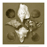 Shell Collector Series III Giclee Print by Renee Stramel