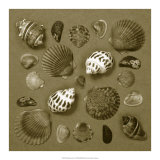 Shell Collector Series V Giclee Print by Renee Stramel