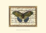 Butterfly Harmony II Art