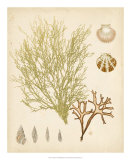 Coastal Relic II Giclee Print