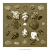 Shell Collector Series VI Giclee Print by Renee Stramel