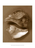 Sensual Shells II Prints by Renee Stramel
