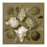 Shell Collector Series IV Giclee Print by Renee Stramel
