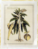 Crackled Paradise Palm II Premium Giclee Print