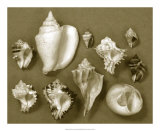 Shell Collector Series II Giclee Print by Renee Stramel