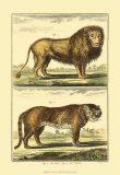 Lion and Tiger Prints by Denis Diderot