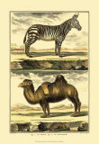 Zebra and Camel Art by Denis Diderot