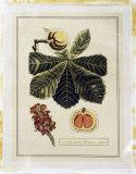 Crackled Paradise Foliage II Premium Giclee Print