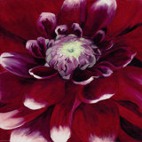 Red Dahlia Art by Beth Winslow