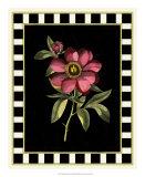 Besler Pink Peony IV Giclee Print by Besler Basilius