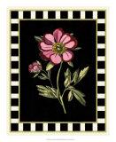 Besler Pink Peony II Giclee Print by Besler Basilius
