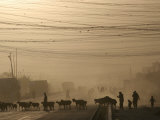 Afghan Herders Lead Their Livestodk Across a Road in Kabul, Afghanistan, Monday, Oct 9, 2006 Photographic Print by Rodrigo Abd