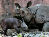 Hartali, a Rhinoceros at the Patna Zoo, is Seen with Her New Baby in Patna, India, January 24, 2007 Photographic Print by Prashant Ravi