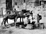 Camels Drinking from Davids Well Bethlehem Israel Photographic Print