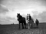 A Man on a Farm Harvesting in a Field with His Two Horses Photographic Print