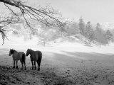 Winter Wonderland: Snow Scene in the Lake District, January 1946 Fotoprint