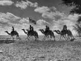 The Camel Corps of the King's African Rifles, October 1945 Fotografisk tryk