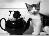 Pinkie the Guinea Pig and Perky the Kitten Tottenahm London, September 1978 Photographie