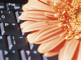 Blooming Orange Flower Next to Black Keyboard Photographic Print