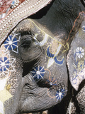 Decorated Elephant, India Photographic Print