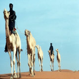 Mali Tribesman Sits on Camel, 1987 Photographic Print