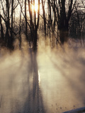 Beautiful Sunlight Streaming Through Mist and Forest Photographic Print