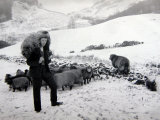 Man with Sheep on Snowy Hills, 1943 Photographic Print