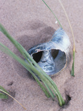 Dried and Empty Snail Shell on Sand and Grass Photographic Print