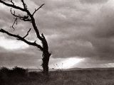 A Dead Tree is Silhouetted Against the Suns Rays on Heath Land, 1935 Photographic Print