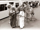 Camels with Arab Handlers at Olympia Station, August 1986 Photographic Print
