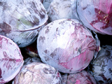 Pile of Purple Cabbages Photographic Print