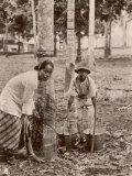 Woman and Young Boy Tap Rubber Trees in Malaya and Collect the Sap in Buckets Photographic Print