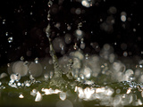 Water Drops Falling Photographic Print