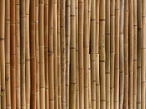 A Wall of Bamboo Stalks Photographic Print