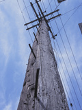 Pole Photographic Print