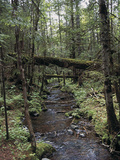 Stream Flowing Through the Woods Photographic Print