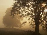 Mattino d'autunno, vicino a Dryman, Stirling, Scozia Stampa fotografica