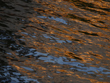 Gold and Blue Sunlight Reflecting on Dark Rippling Water Photographic Print